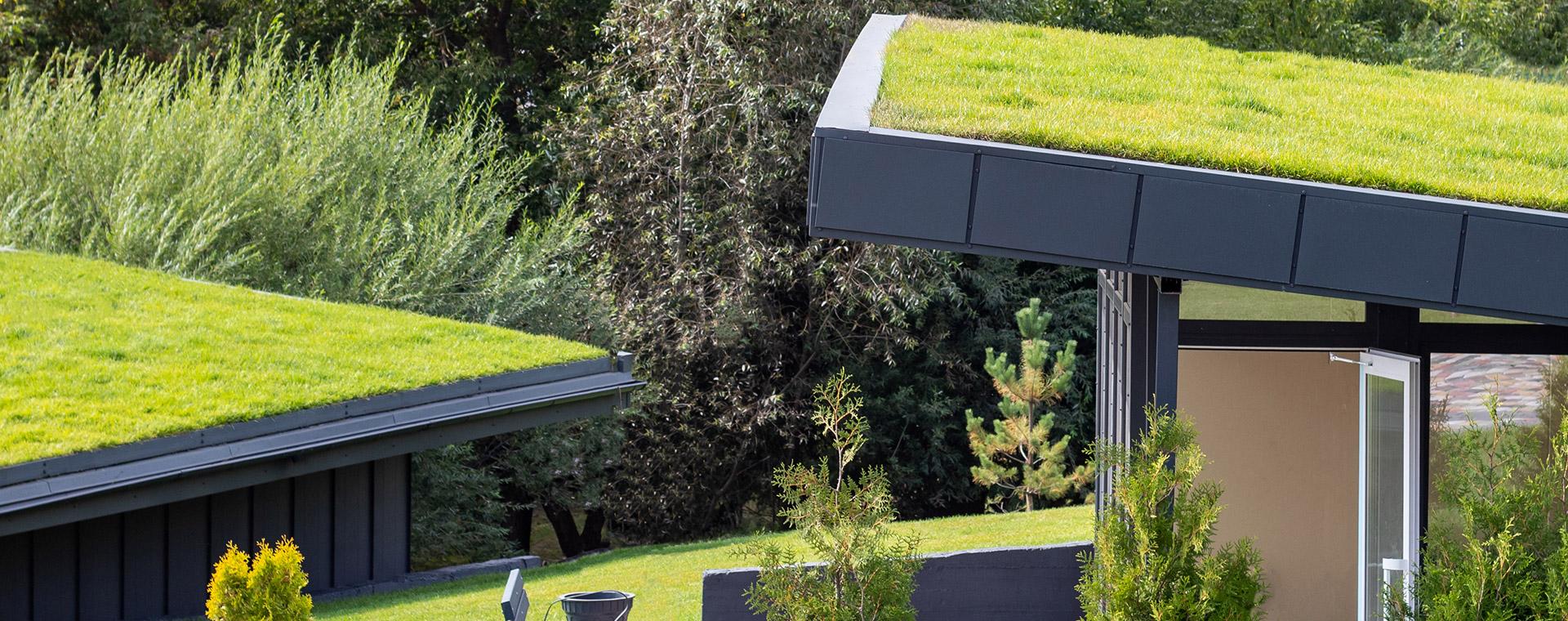 Zelené střechy: Proč jsou výhodné a jak získat dotace?