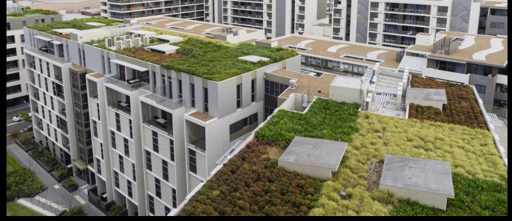 zelená střecha a nenáročné rostliny bez starostí